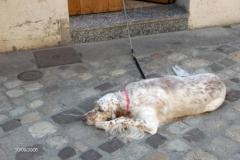 Kuža iz Ravenne