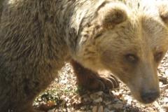 Medvedek Čupa