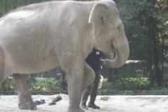 slončica Ganga
