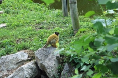 Mala opica