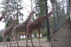 Zoo Ljubljana