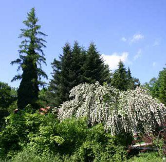 Botanični vrt